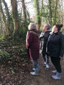 three people gazing at trees